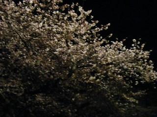 20080405-DSCF0821_ed.jpg